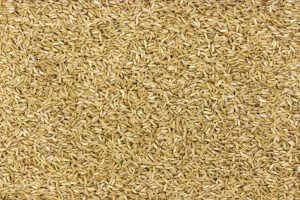 Brown rice groats background, untreated rice